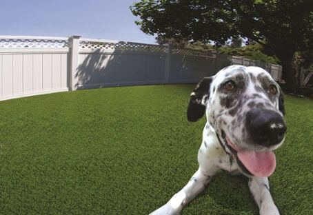 Artificial Grass For Dogs In Atlanta Atlanta Artificial